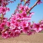 Primavera ridente!